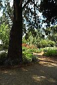 Cedar with garden