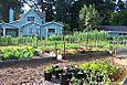 Veggie Beds 2006