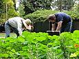 Picking Herbs October 2007