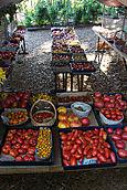 Tomato Stand 2005