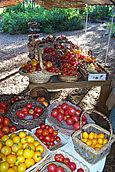 Tomato Stand 2006
