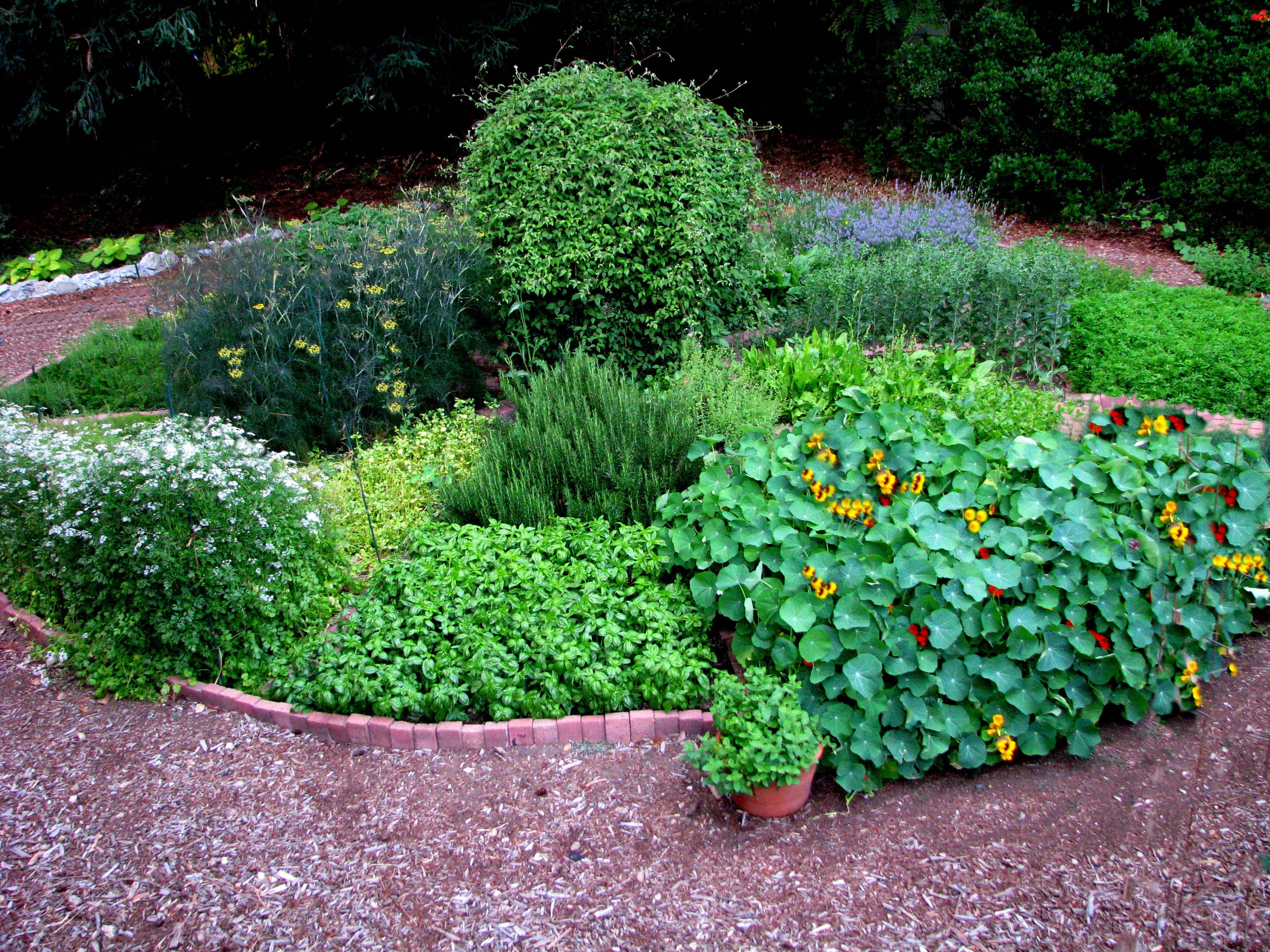 Work Growing Culinary Herbs Herb Circle