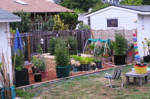 Garden_08-07-11_01small
