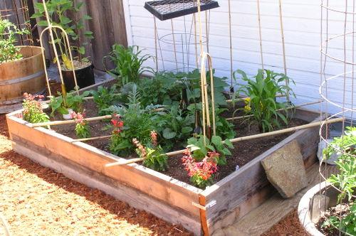Garden08-06-01_05