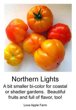 NorthernLightsLabelforblogpost