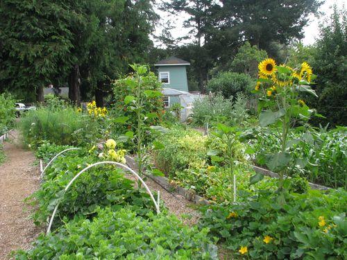 Garden3on6.28.2010