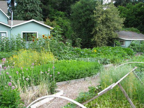 Garden4on6.28.2010