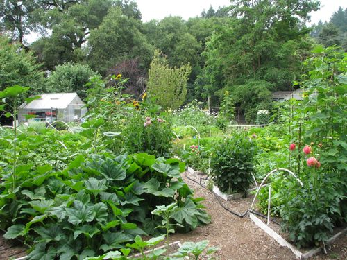 Garden on 6.28.2010