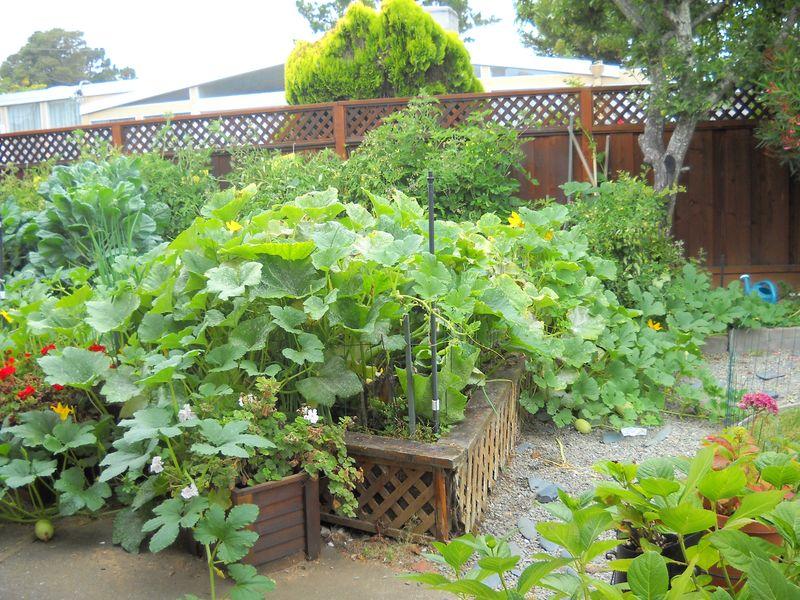 Steve Gehr's Garden2
