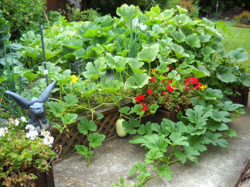 Steve Gehre's Garden