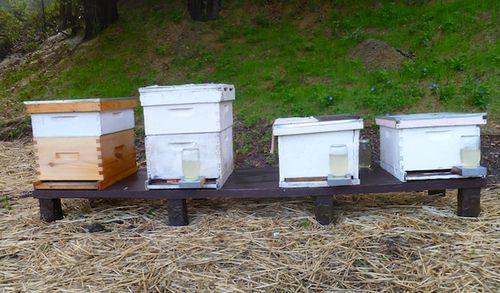 Hives2