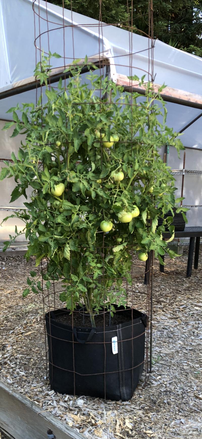 Tall tomato cage