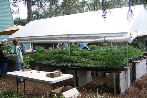 Seedling sale 2007
