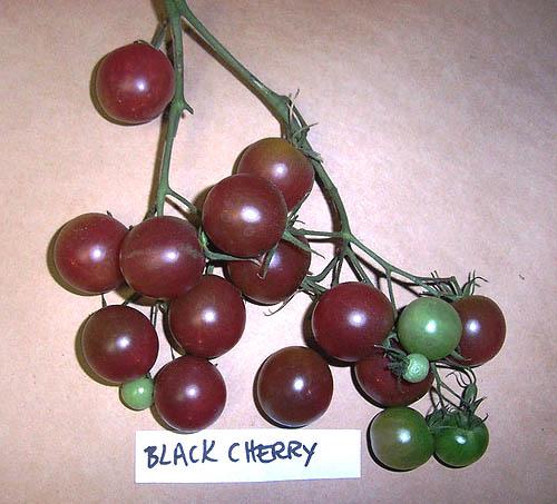 Black_cherry