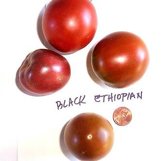 Black_ethiopian