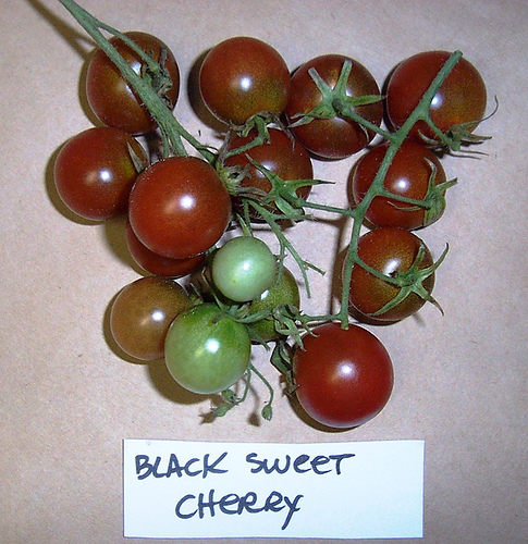 Black_sweet_cherry