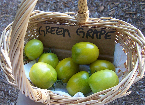 Green Apple Varieties http://www.growbetterveggies.com/photos/tomato_varieties/green_grape.html
