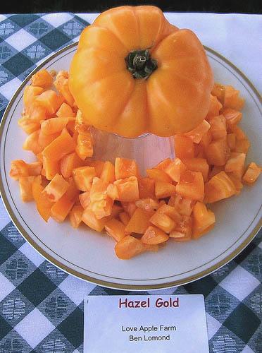 Hazel_gold
