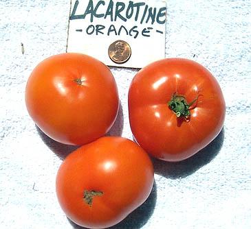Lacarotina