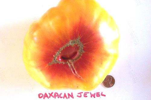 Oaxacan_jewel